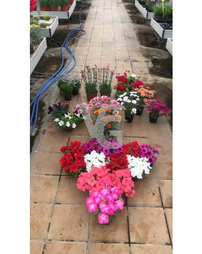 pack flores temporada