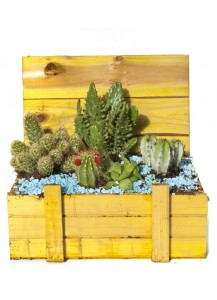 Baul Cactus Standard