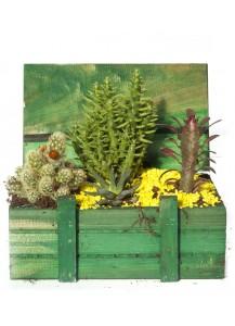 Baul Cactus Premium