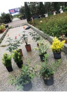 pack exterior arbusto+sustrato