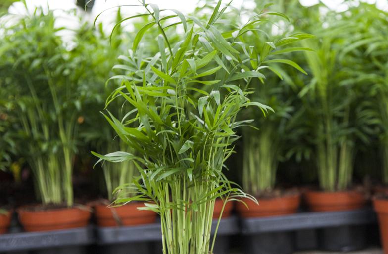 Blog plantas para jardines verticales o azoteas for Cuales son las plantas para interiores