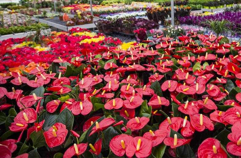 Blog plantas para jardines verticales o azoteas - Arboles y plantas de jardin ...