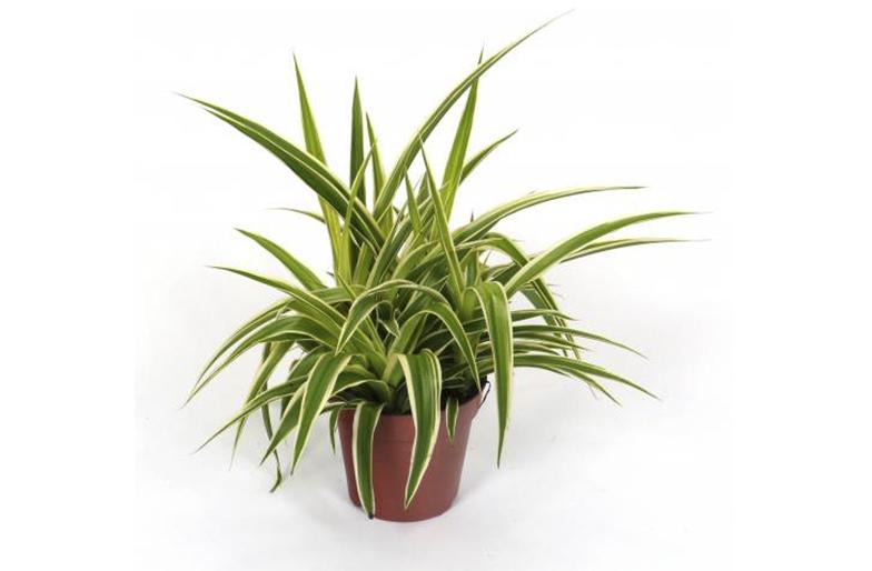 blog plantas que purifican tu hogar. Black Bedroom Furniture Sets. Home Design Ideas