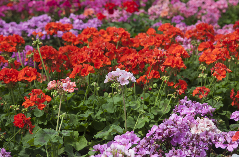 Blog plantas para jardines verticales o azoteas - Plantas de exterior con flor ...