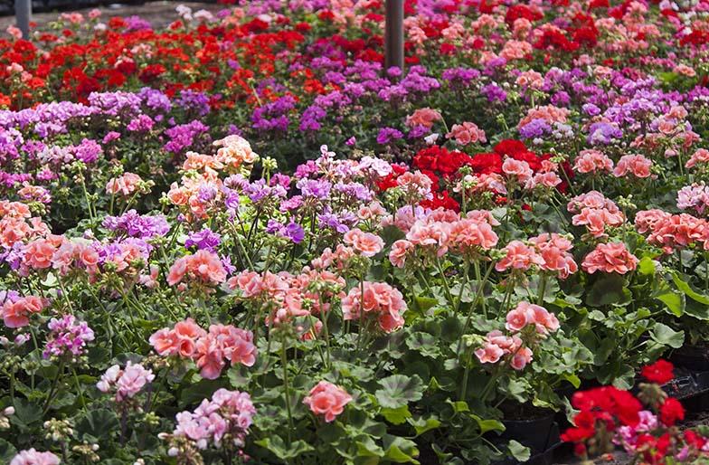 Plantas resistentes al sol directo awesome hay with - Plantas muy resistentes al sol ...