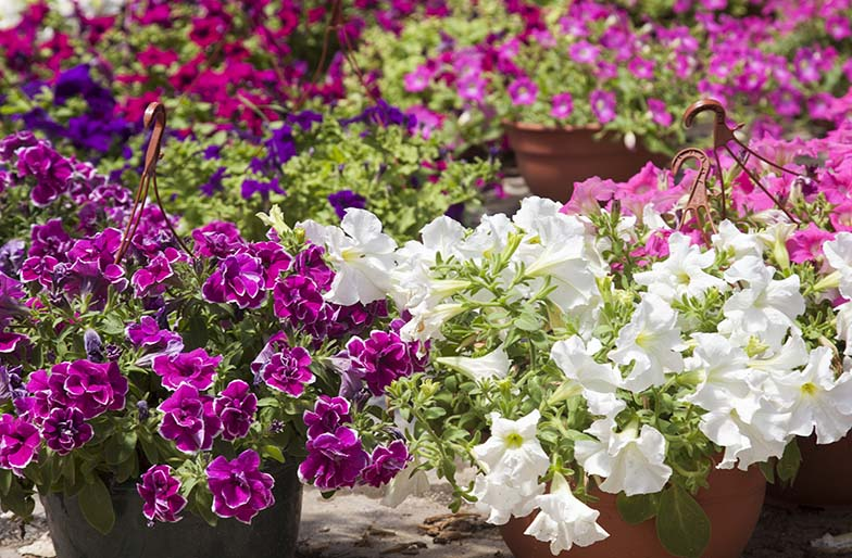 Plantas resistentes al calor fabulous harto del calor - Plantas de exterior resistentes al calor ...