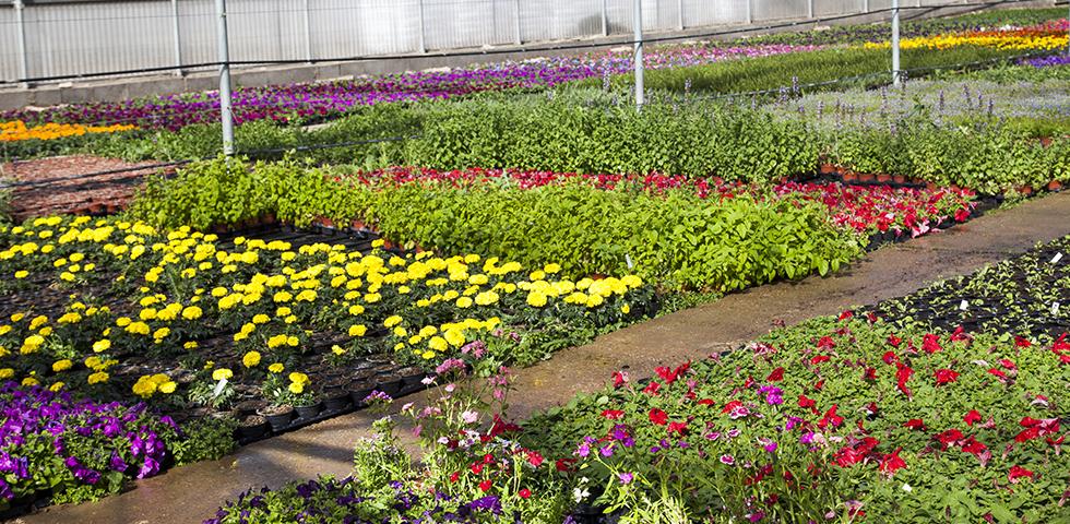 Viveros gutierrez for Viveros plantas de interior